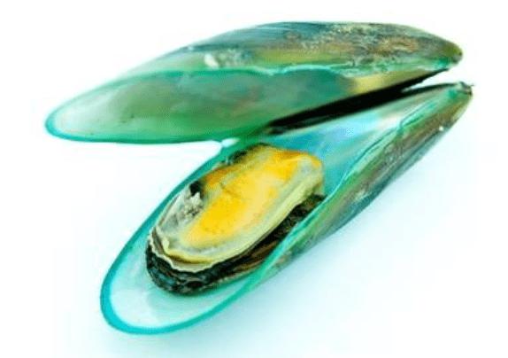 groenlipmossel voedingssupplement