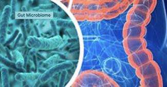 darmflora en probiotica