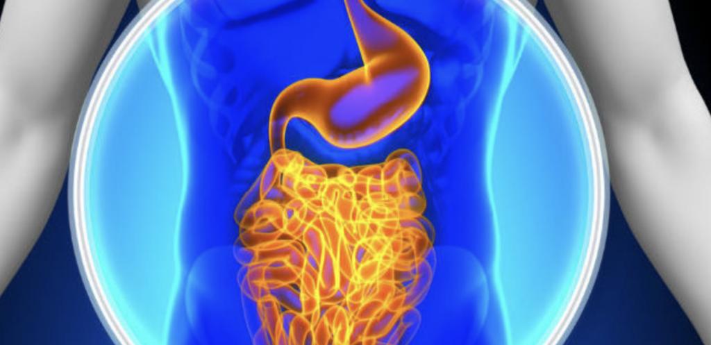 Probiotica en onze darmen